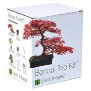 Set de plantación para 3 Árboles de Bonsái