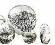 Ecoesfera - Vivir en una bola de cristal